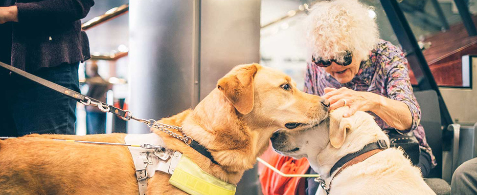 Photo: An elderly woman wearing dark glasses petting two assistance dogs